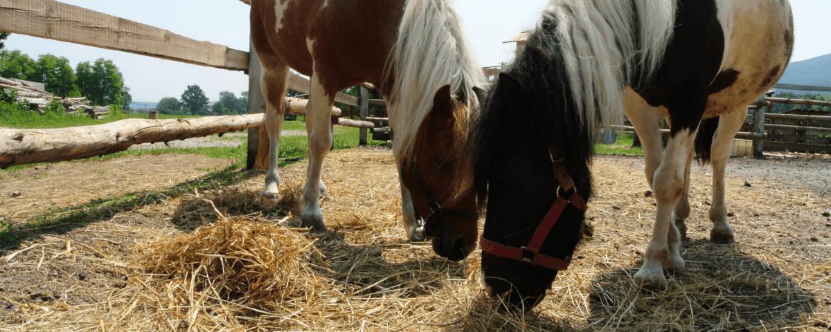 ranc-dravinja-oglas